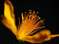 黄色い花 | 写真のイラストも商用利用できるサイトPixabay