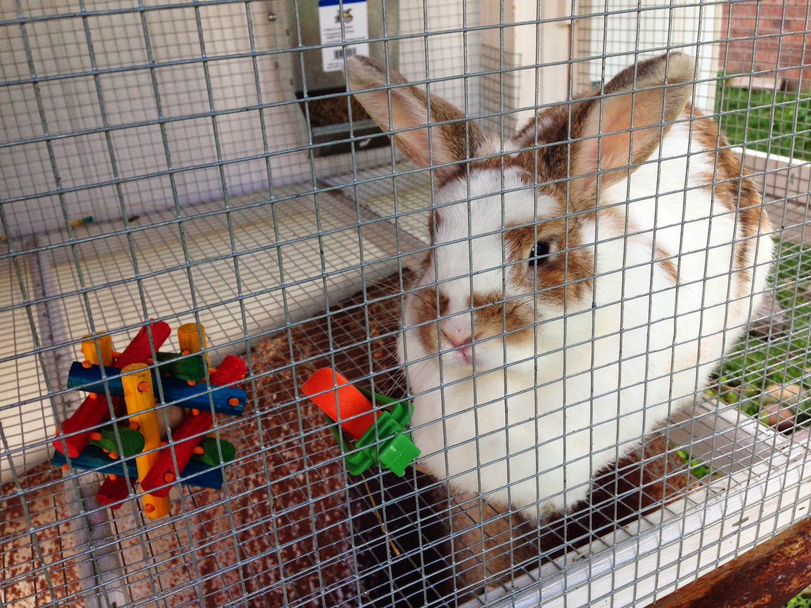 Cheap And Easy Rabbit Hutch We Love It, Hazel Loves It, And If You