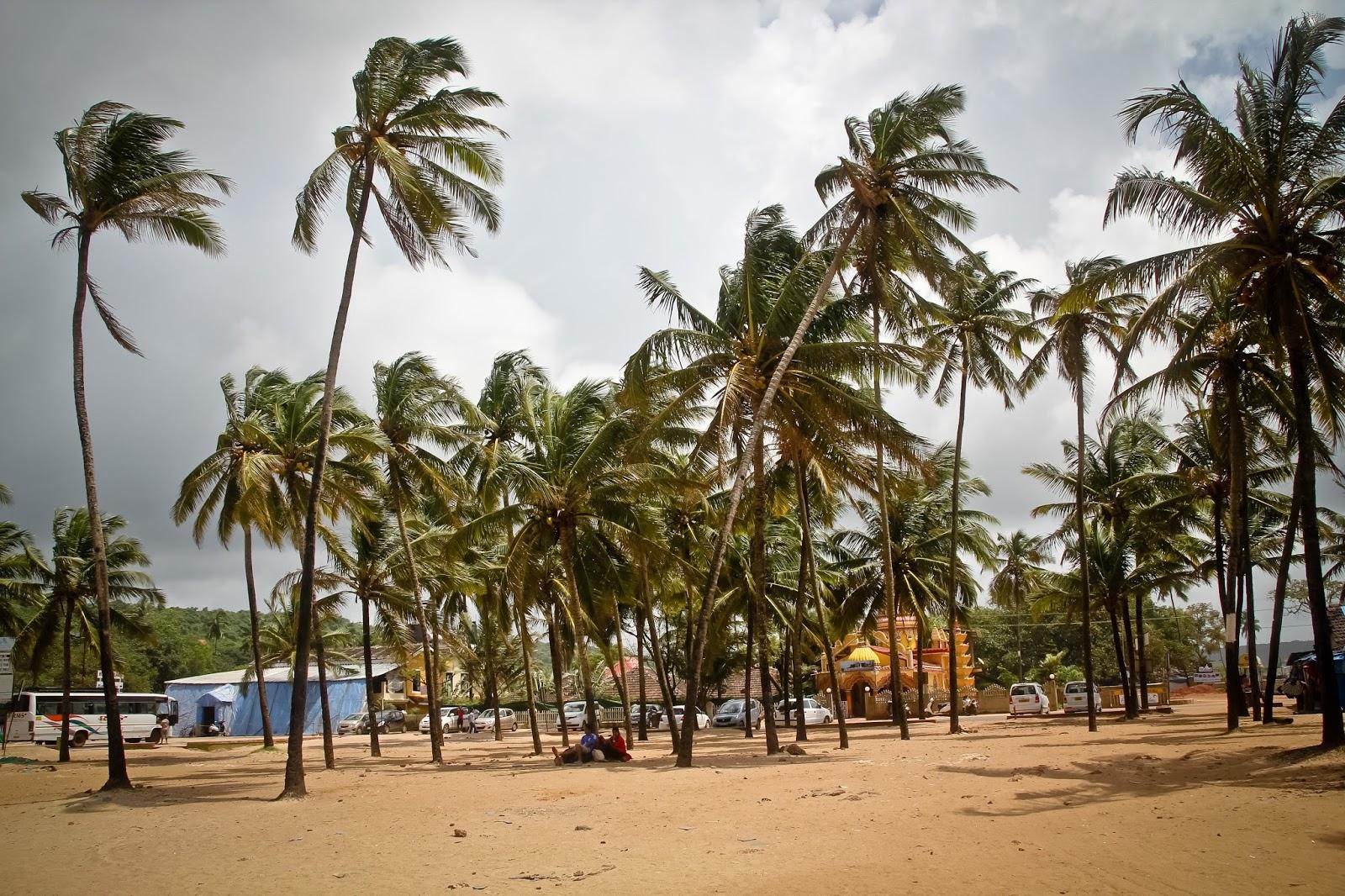 Бага, Индия отдых, пляжи, отели Баги от «Тонкостей туризма» 8