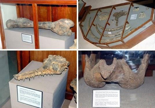 Gambar Koleksi Museum Purbakala Sangiran
