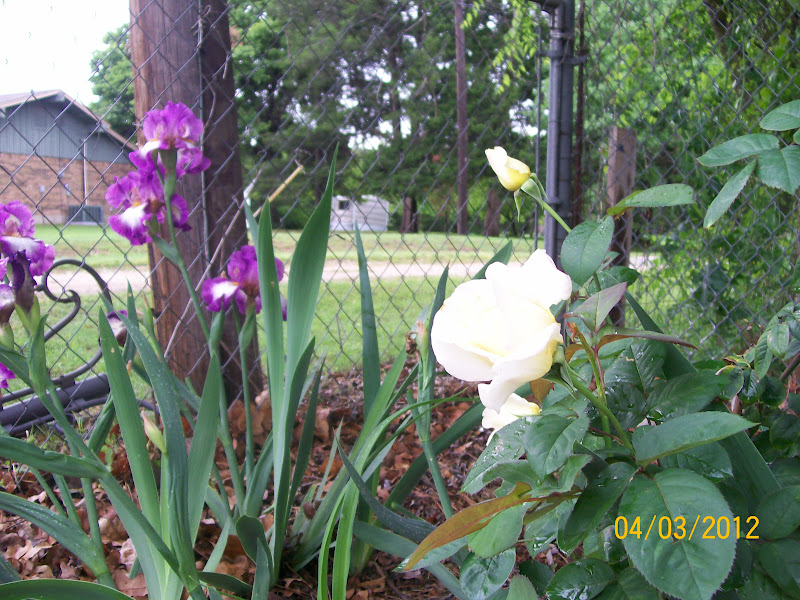 Amateur Gardener Pairings