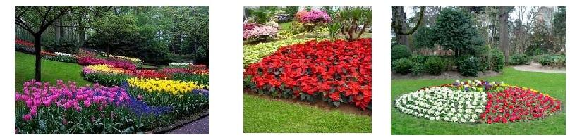 Flores manolita creaci n de jardines y mantenimento for Creacion de jardines