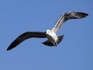 Burung terbang mengepakan sayapnya berkaitan dengan aksi reaksi