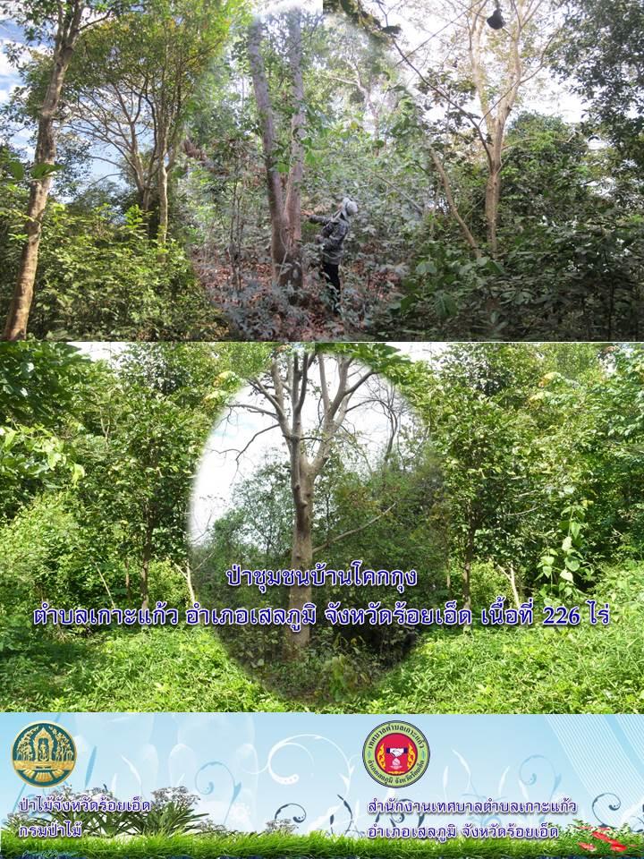 ป่าชุมชนบ้านโคกกุง เนื้อที่ 226 ไร่