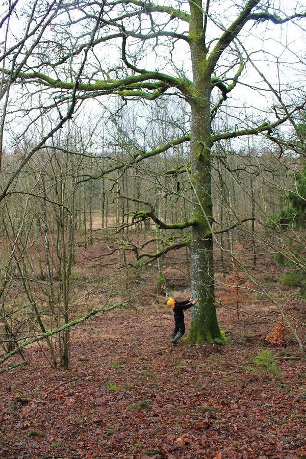 Io e l'albero
