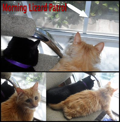 George & Mika Morning Lizard Patrol