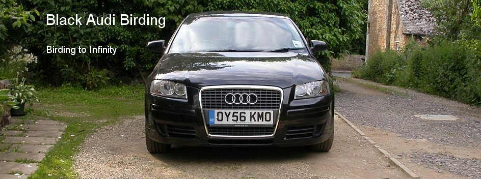 Black Audi Birding