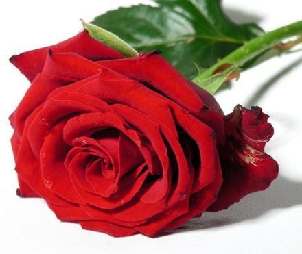 Imagenes De Rosas.Com}