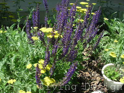 Living Design: June Garden