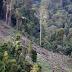 Greenpeace : 110 Ribu Hektar Hutan Berkurang dalam Setahun Akibat Pemekaran Wilayah