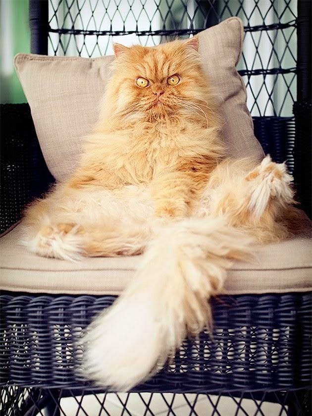 adorable-cat-2