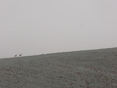 Konie, jazda konna w terenie, pierwsze mrozy