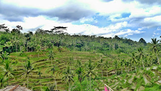 Tegalallang, Bali Tour Spectacular Scenery Indonesia