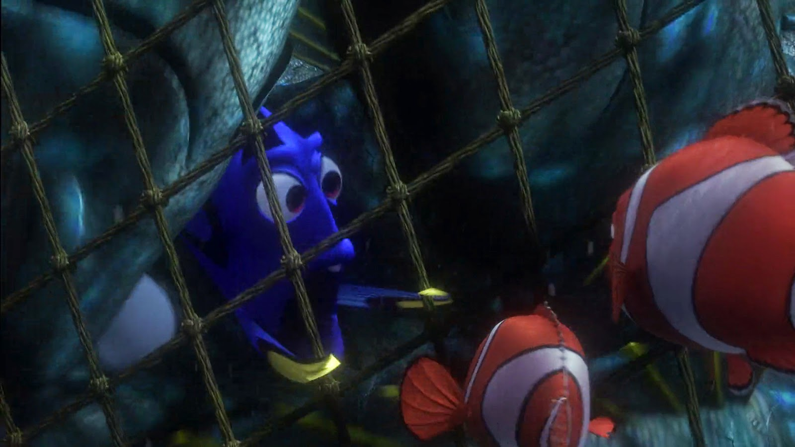 Nemo 39 s lucky fin life or something nemo the most for Finding nemo fish
