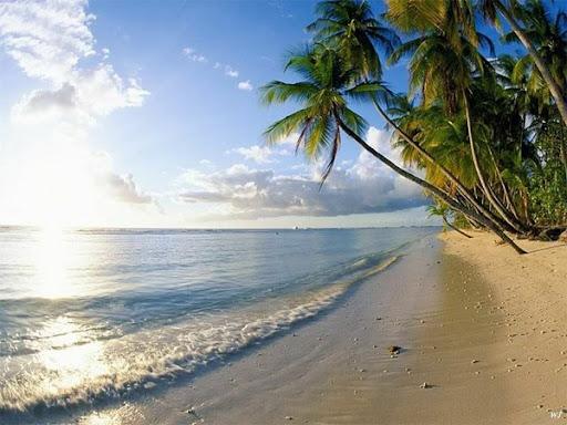 Sandstrand unter tropischen Palmen