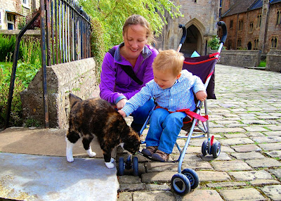 Cat in the Vicar's Close