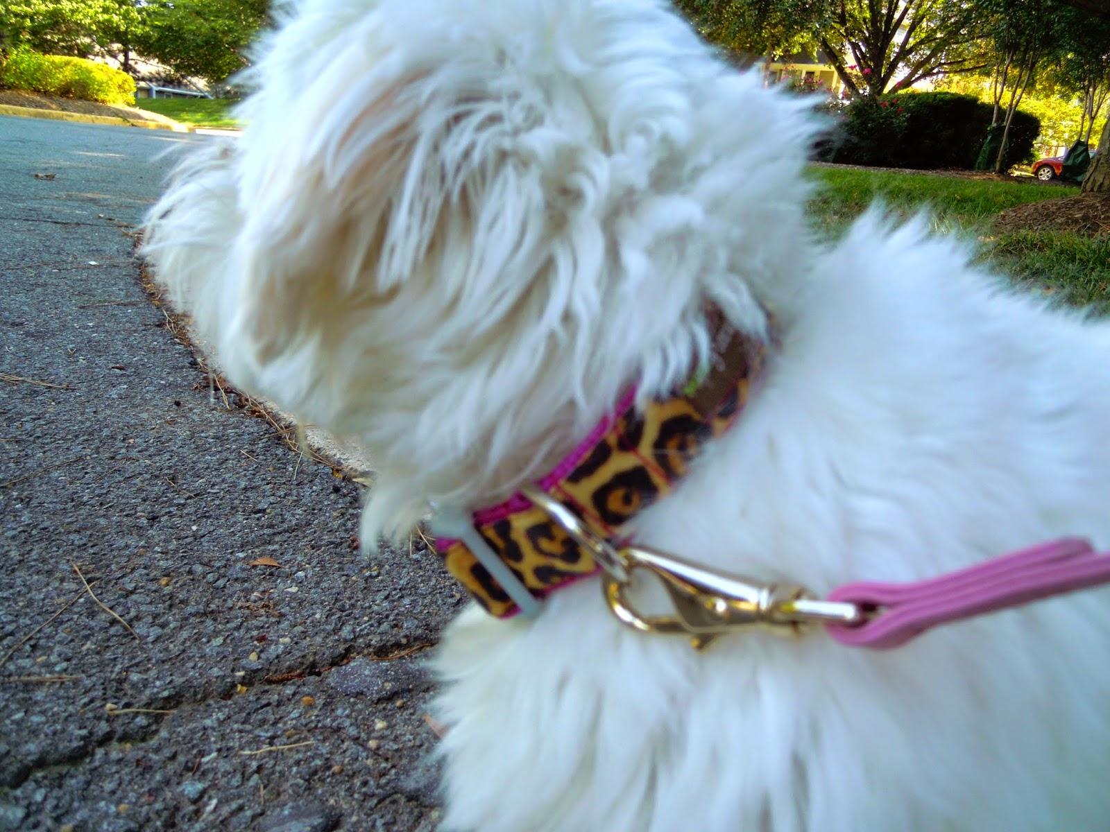 leoaprd-dog-collar