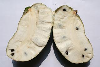 Buah sirsak (Annona muricata)