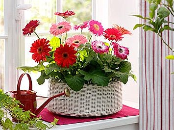 1800flowers service reviews