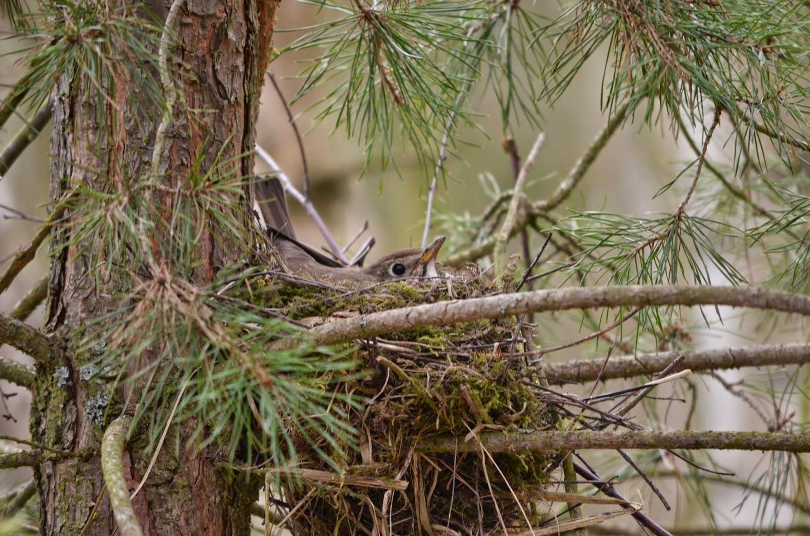 Pudové chování ptáků na hnízdě