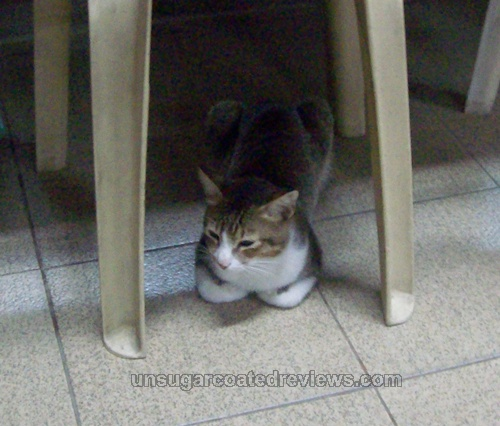 cute kitty lurking under the chairs