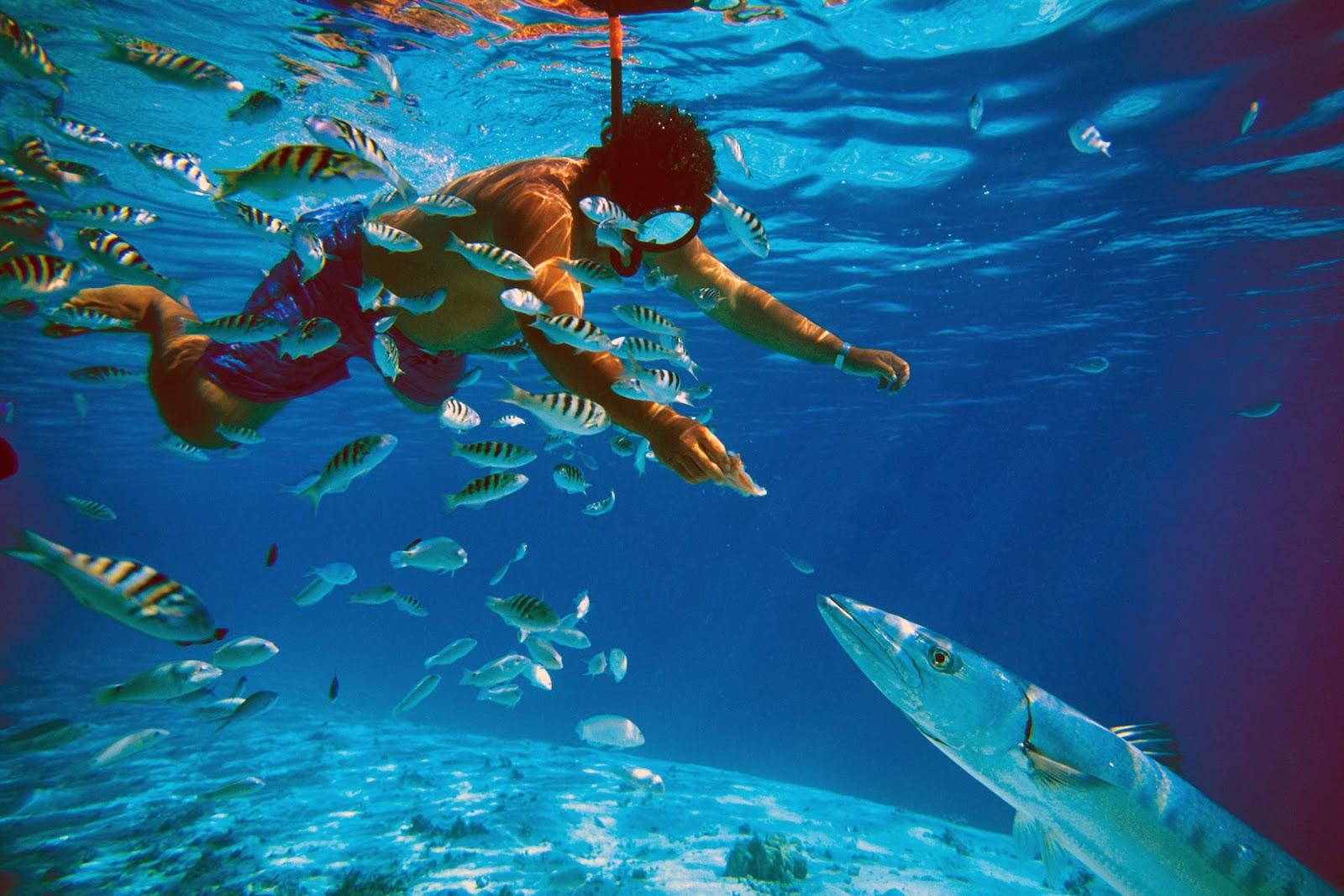 Tetiaroa, holiday in tahiti, vacation in Bora Bora, Moorea holiday, Brando resort, garden of eden, surfing, trekking, diving, Plage de Toaroto, honeymoon in Moorea, Mutiny on the Bounty,