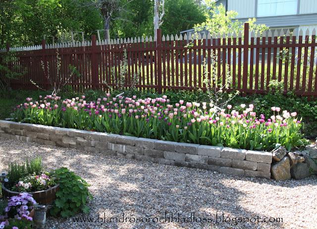 Staket staket rosor : Min hemlighet!