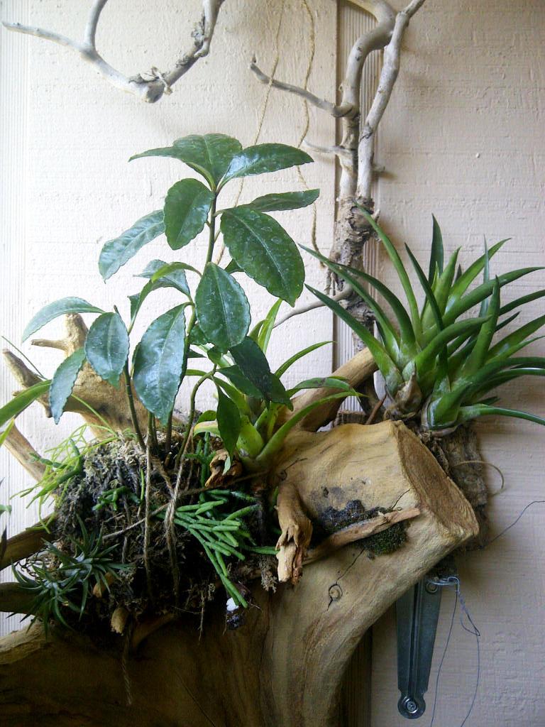 The Rainforest Garden: My Small Space Container Garden