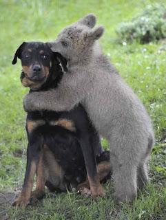 Bayi Beruang Memeluk Anjing