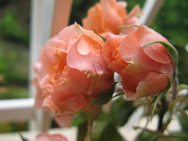 Contro moda fiori sotto la pioggia for Sotto la pioggia ombrelli