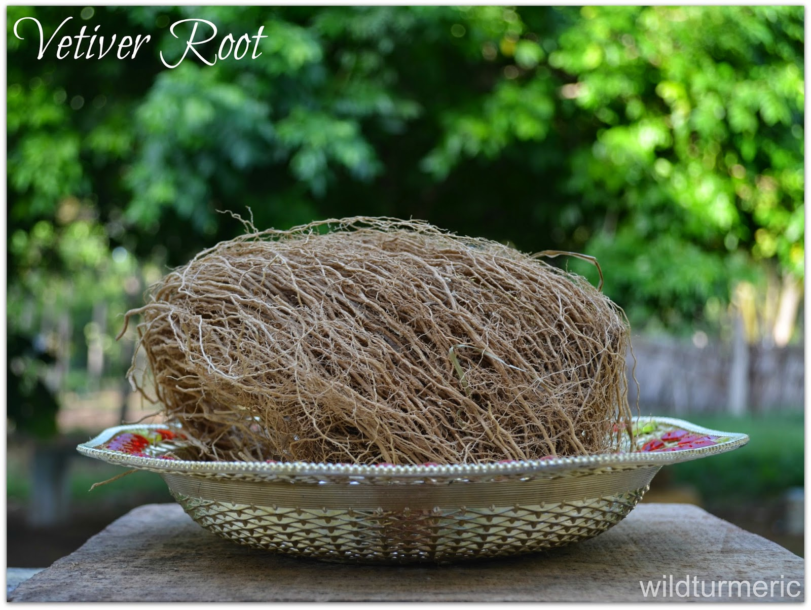 5 Amazing Medicinal Uses & Benefits of Vetiver for Hair, Skin and Health