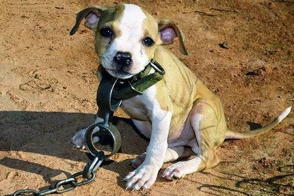 Por estas e por outras é que eu DEFENDO tanto os animais e APOIO muito quem cuida e trata deles