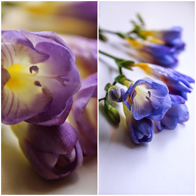 beautiful freesia flowers