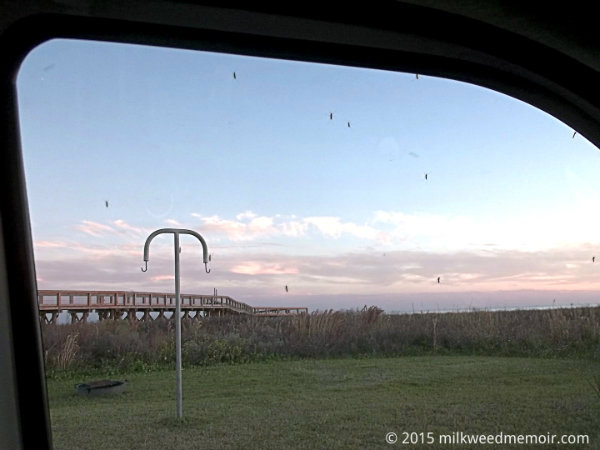 Many mosquitoes pressed to car window at Sea Rim State Park in Sabine Pass, Texas