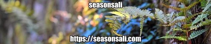 seasonsali