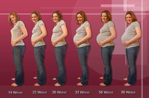 pregnancy stages week by week what is pregnancy rh what is pregnancy blogspot com pregnancy guide by week pregnancy weight guide by week