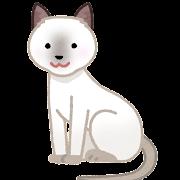 トンキニーズのイラスト(猫)