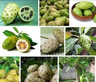 buah mengkudu obat diabetes alami