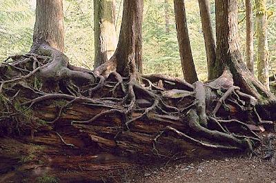 Eglise universelle cameroun tuer la racine par la faim - Comment tuer un arbre sans le couper ...