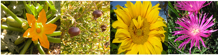 Buap jardin botanico for Importancia de las plantas ornamentales