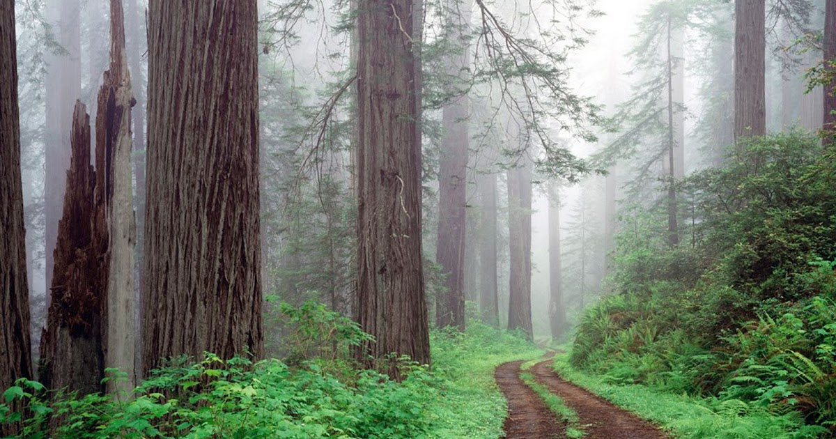 wallpapers: Forest Road Wallpapers