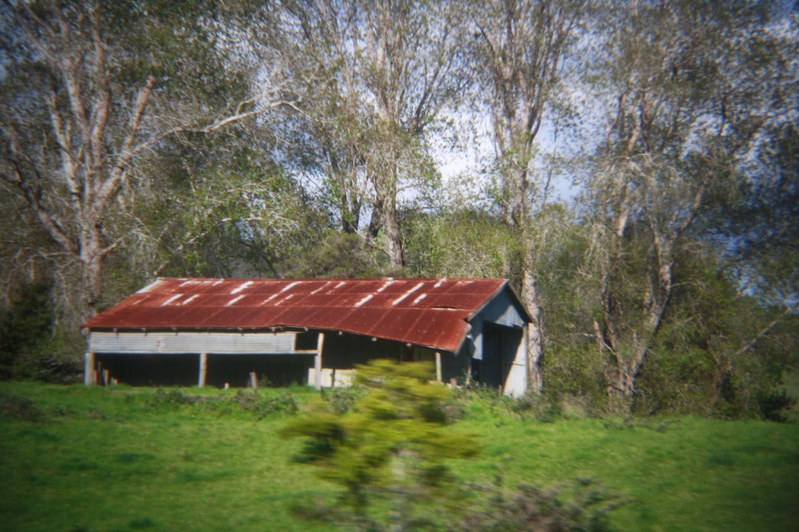 Abandoned shed in Northland, New Zealand. One corner of the roof is caving in.