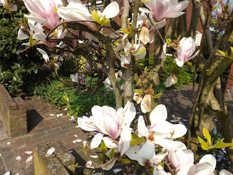 TAG: Spring has sprung