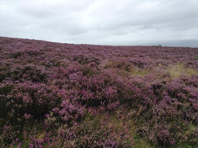 english countryside wild flowers summer cute british