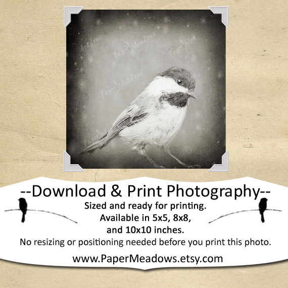 Winter Chickadee photography. You can purchase and download our photography creations and instantly print at home from our Paper Meadows Photography Shop on ETSY. To Visit our shop now click here.