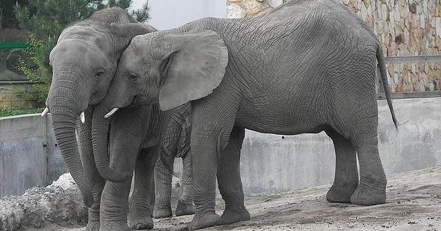 Elefante Con Le Ghette Testo E Video Della Canzone
