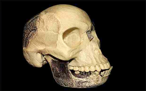 The Piltdown Man