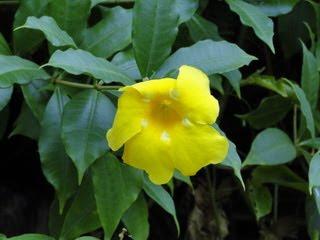 flores no pantanal