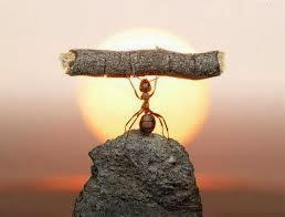 تعرف على الرجل الذي أسلم على يد نملة  - عالم النمل النملة ممكلة حكمة الاسلام - ants