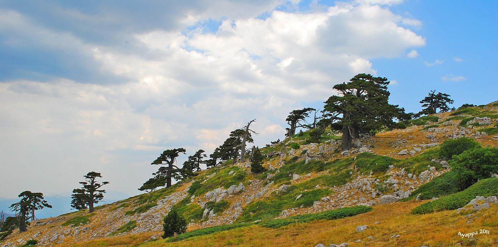 Alberi e dintorni storie di alberi il giardino degli dei - Il giardino degli esperidi ...